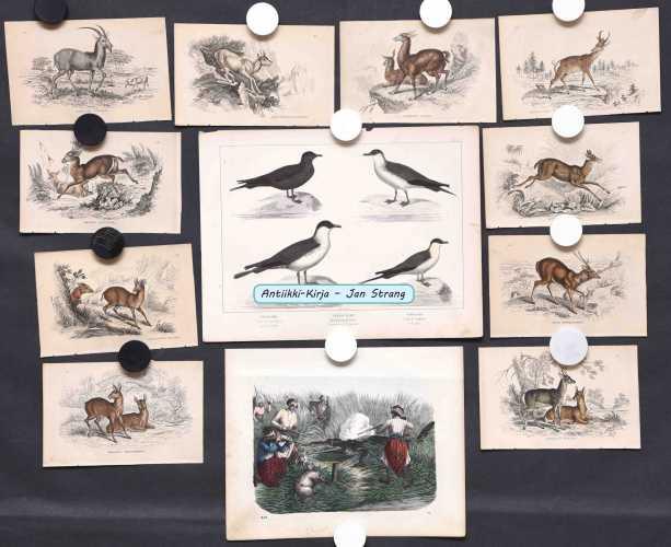 Eläinkuvia 1800-luvulta (12 kpl)