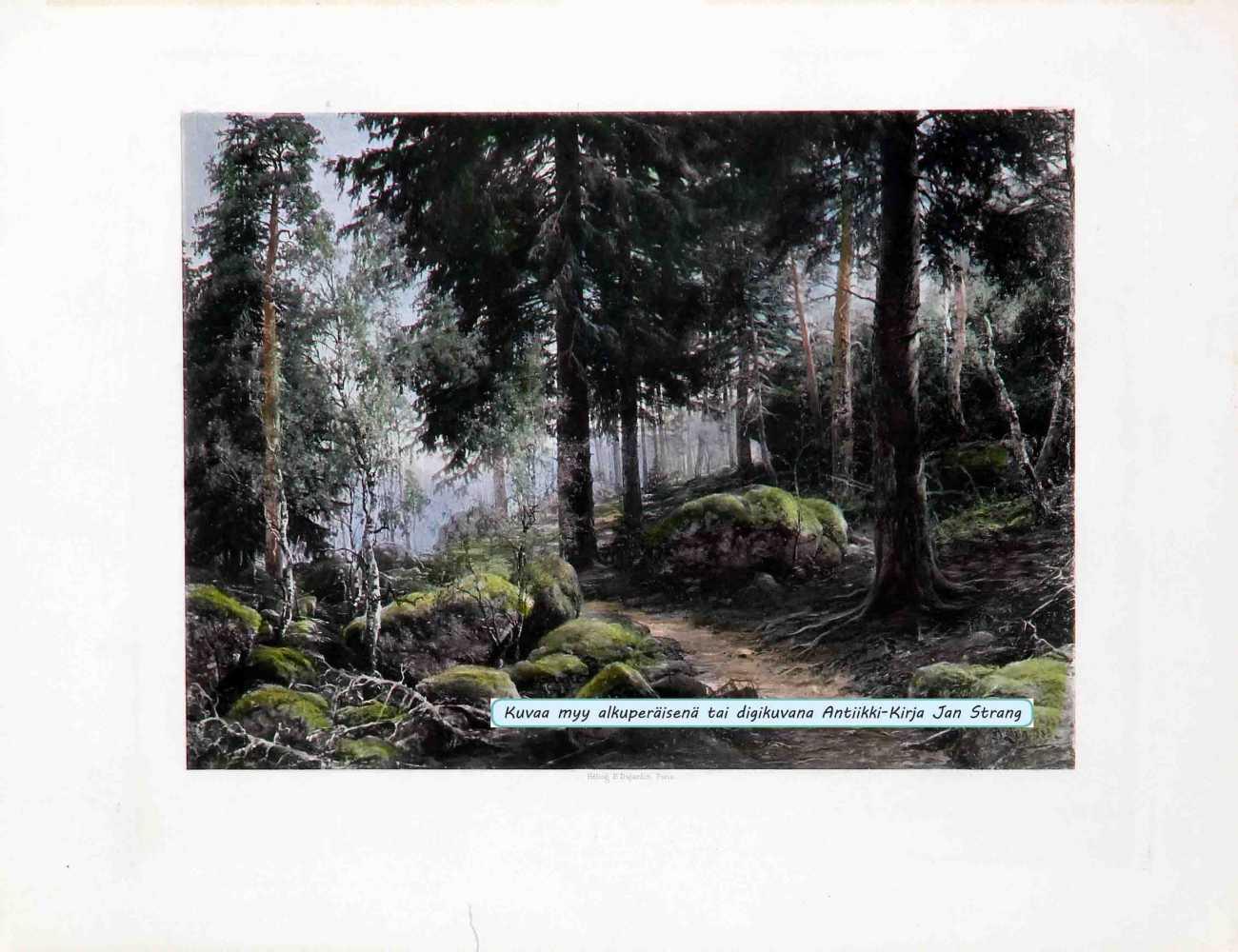 LINDHOLM, B. Metsän sisusta